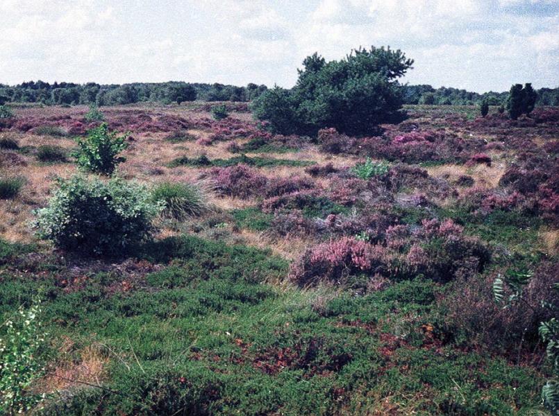 1982-015-dwingelo
