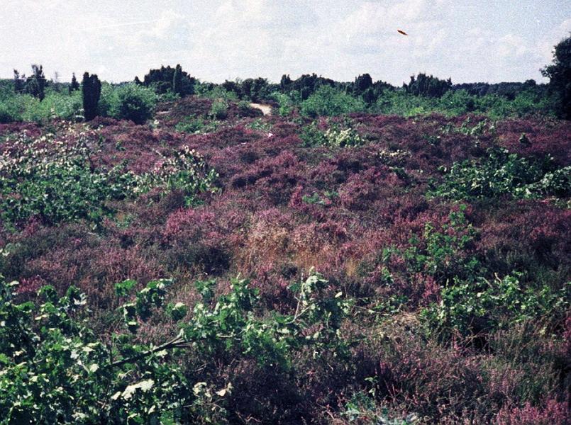 1982-016-dwingelo