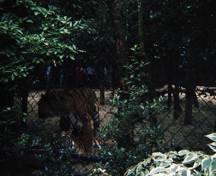 1982-021-dwingelo
