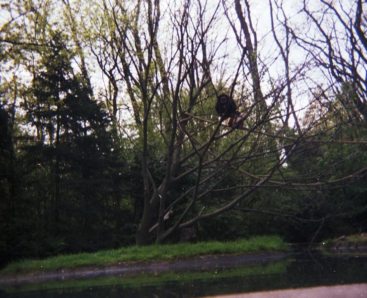 1983-het-grote-bos-034