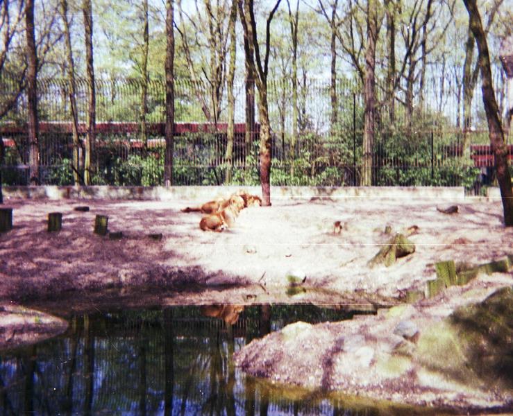 1983-het-grote-bos-035