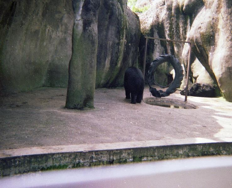 1983-het-grote-bos-036