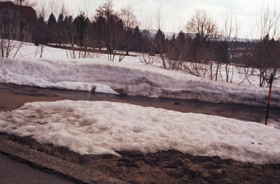1999-zwarte-woud-09